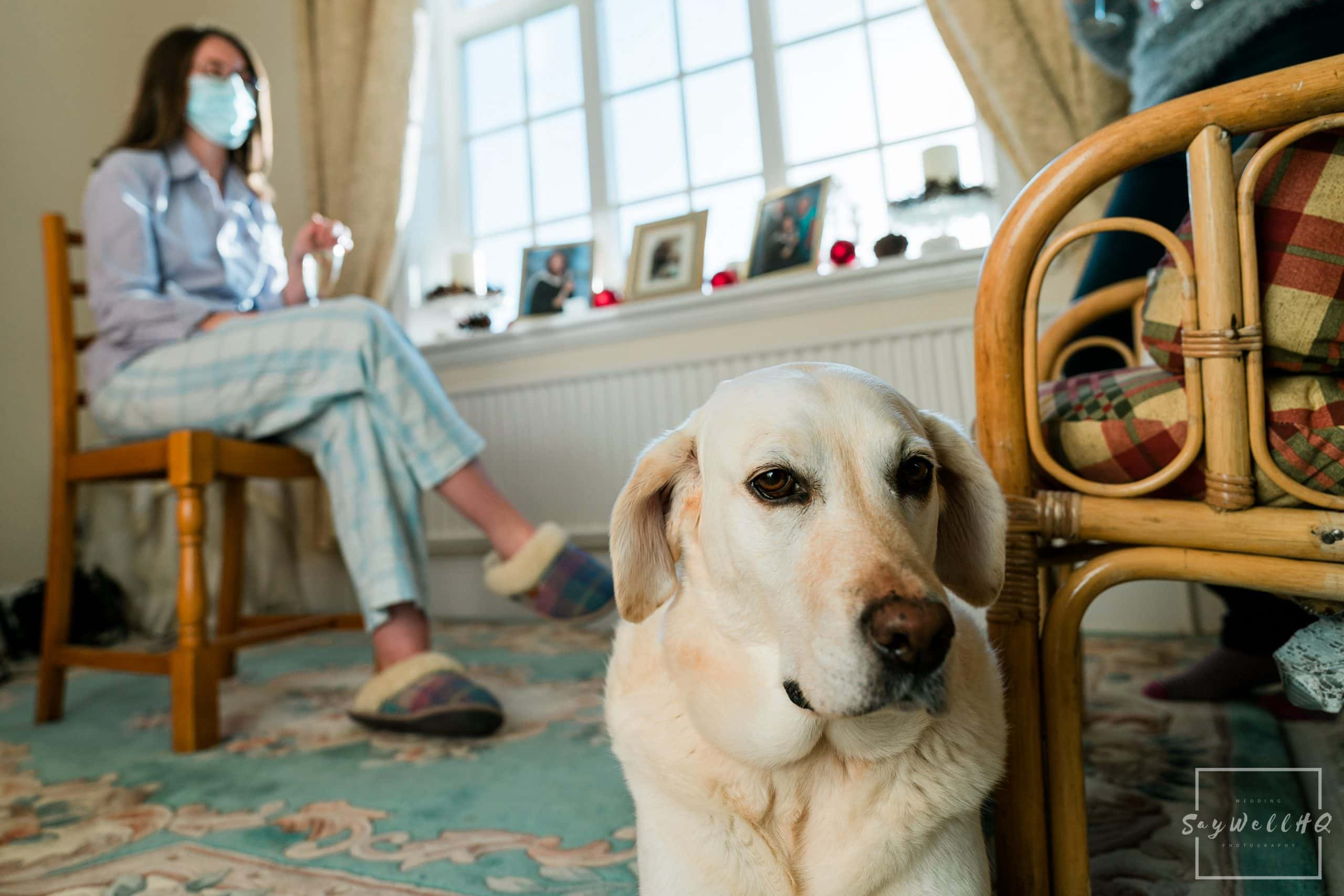 Millie the labrador keeping the Bride company on the day of her wedding - Vale of Belvoir Wedding Photography