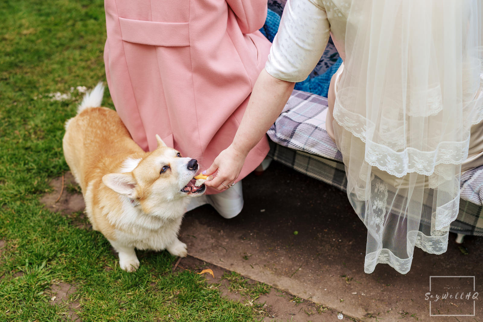 Newark Wedding Photography + Newark Wedding Photographer + bride feeds their Corgi dog during the post wedding ceremony picnic